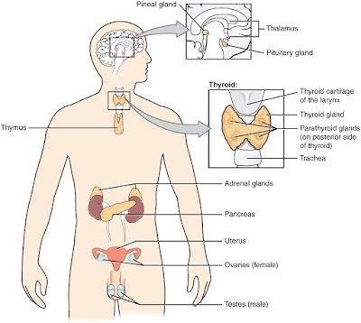 list of hormones in human body and their functions  human hormones and their functions chart  hormones in human body and their functions pdf  importance of hormones in human body  the main function of hormones in the human body is to  most important hormones  list of hormones in human body and their functions pdf  human hormones and their functions class 10