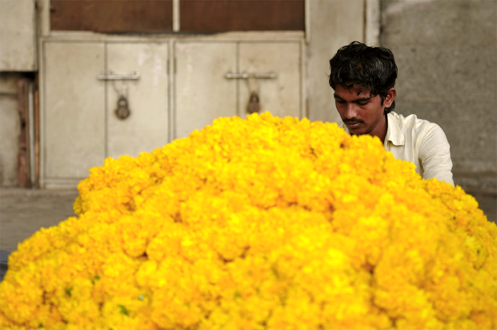 Marigold flowers, India submitted to the 'People at Work' photo assignment with Better Photography.