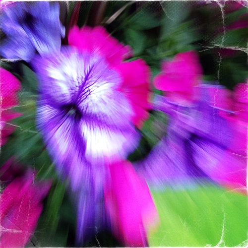 """""""Purple Promise"""" by """"Sab Will"""" (for """"Jenny Joseph"""")"""