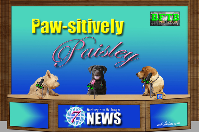 BFTB NETWoof News Paw-sitively Paisley