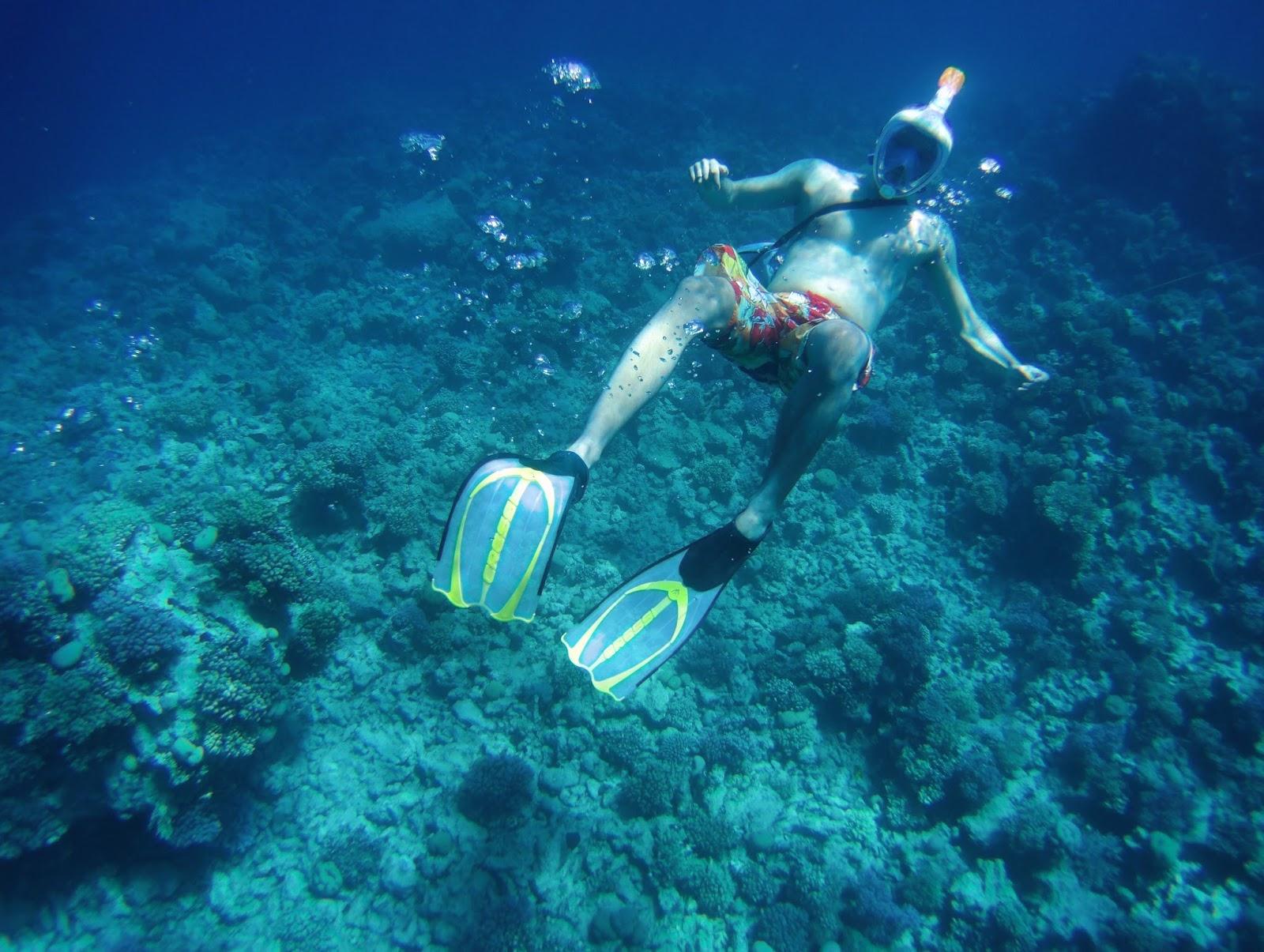 ägypten, delphine, erwachsenenhotel, fischarten, hurghada, korallenriff, makadi bay, makadi spa, rochen, rotes meer, schildkröten, schnorchelmaske, schnorcheln, strandurlaub, tauchen, travel blogger, urlaub,