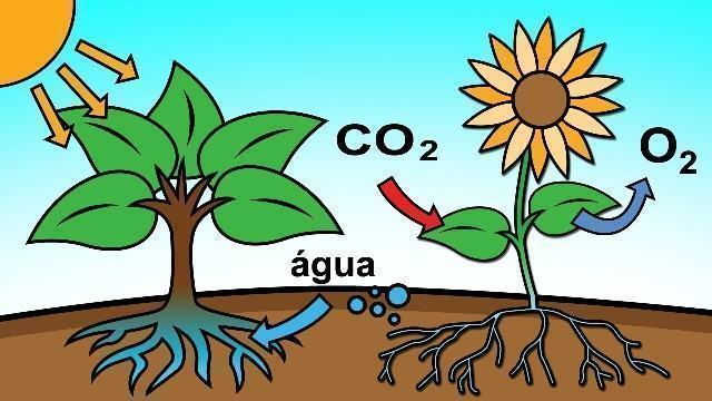 Absorção | Absorção de Energia e Biológica