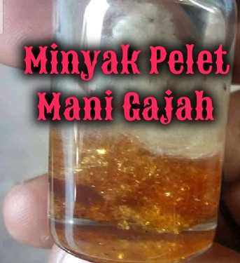 Minyak Gajah mani merupakan salah satu dari banyaknya minyak pelet pengasihan Penjelasan Pelet Minyak Mani (Geliga) Gajah Tunggal √
