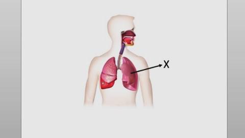soal pat ipa kelas 8 tentang fungsi organ paru-paru