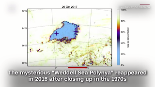 Poly in the Weddell Sea, Antarctica