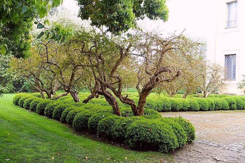 Jardín de entrada en Torrecchia Vecchia