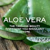 You should know 30 benefits of aloe vera for health and beauty