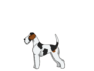 Furry-Paws Dog Breed Colors : Wire Fox Terrier Colors