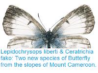 https://sciencythoughts.blogspot.com/2016/08/lepidochrysops-liberti-ceratrichia-fako.html