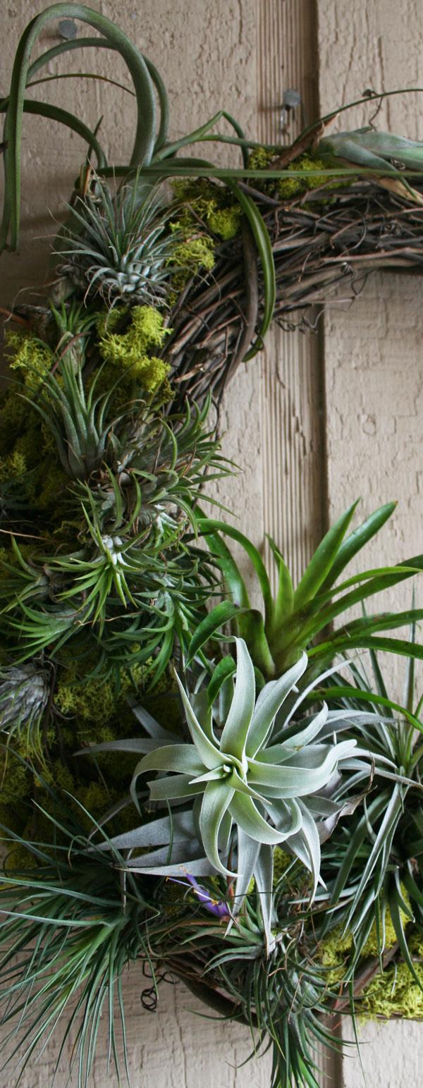 The Rainforest Garden Diy Mossy Tillandsia Wreath