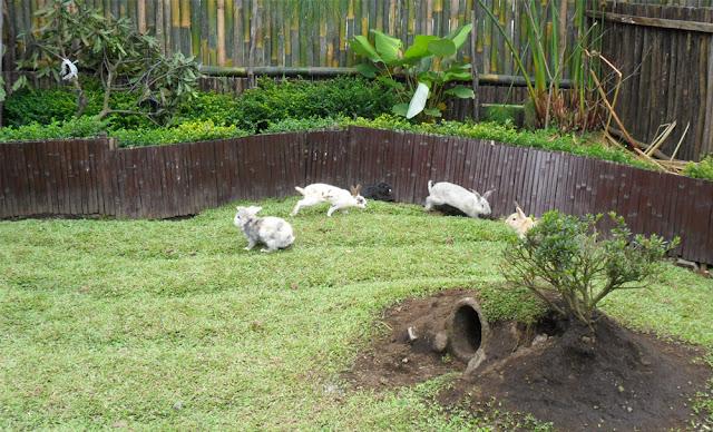 Wahana outbound dan taman kelinci di Cimanggu