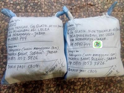 Benih Padi Pesanan   NANO Indramayu, Jabar.    (Setelah di Packing).