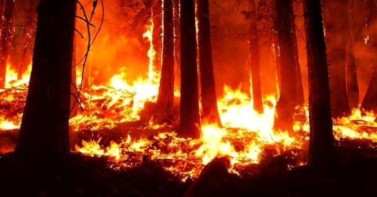 Orman yangını kurumuş yaprak, dal ya da otların aşırı ısınmasından kaynaklanır.