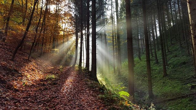 ảnh rừng thu đẹp