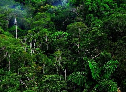 Η πρώτη μελέτη για τις επιπτώσεις που έχει στην κλιματική αλλαγή το κατεστραμμένο δάσος του Αμαζονίου