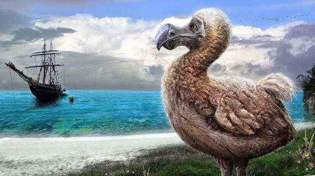 Chim dodo bi con người săn tuyệt chủng
