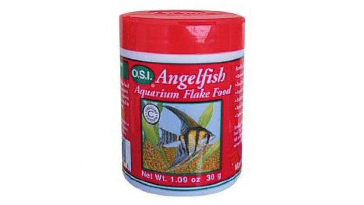 marine dwarf angelfish