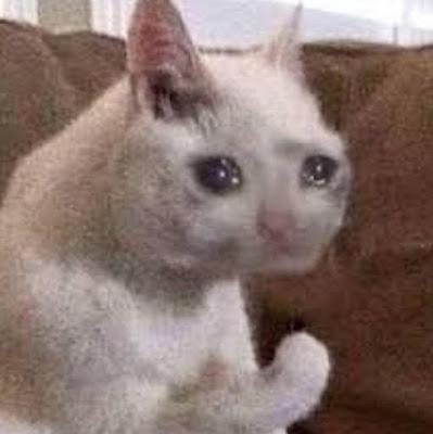 Tags: crying cat meme,sad cat meme,sad cat,sad cat memes,cat sad,sad cat face,sad cat eyes,  cat sad meme,sad fat cat,sad crying cat, sad cowboy cat,sad cat png, crying cat,cat crying,  cat crying meme,crying cat memes,crying cat face,crying woman cat meme,meme cat crying