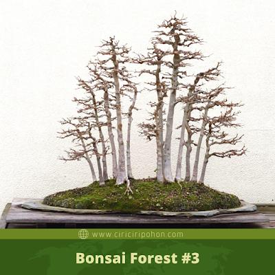 Bonsai Forest #3