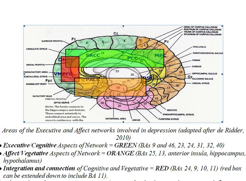Großartig Kapitel 10 Anatomie Und Physiologie Ideen - Menschliche ...