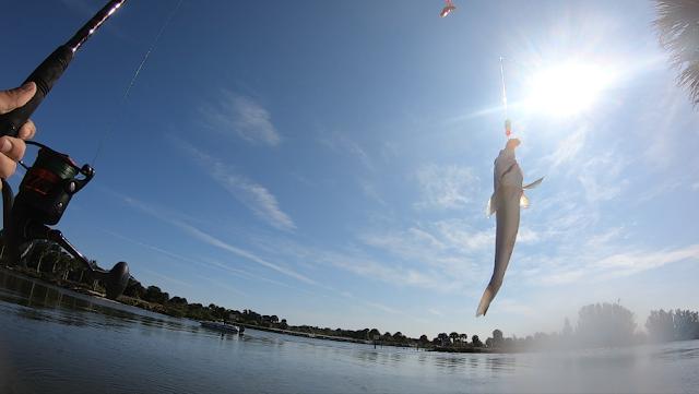 Florida, East Coast, Florida Fishing, Florida Surf Fishing, Surf Fishing, Florida East Coast Surf Fishing, Fishing Reports, Fish Reports, Anglers, Cocoa Beach,