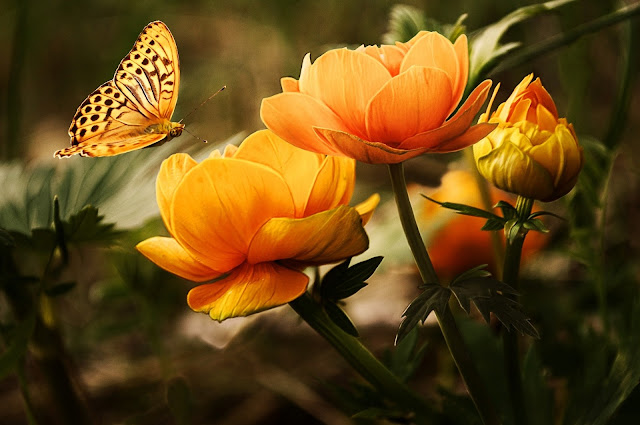 beautiful Orange Flower With Butterfly HD Wallpaper