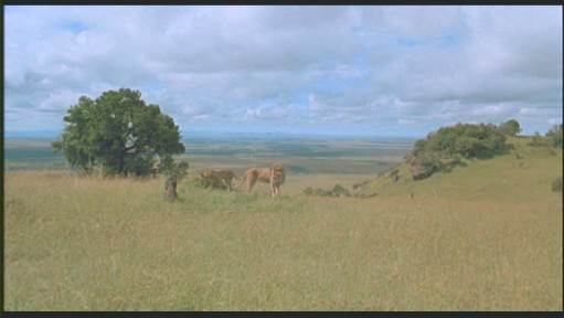 Lions On Denys Finch Hatton S Ngong Hills Grave From The