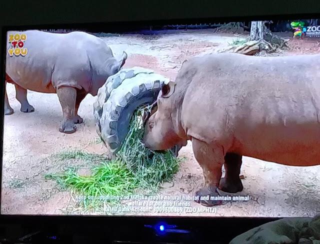 Lawatan ke Zoo Melaka percuma secara maya