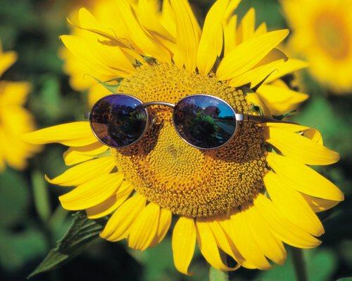 Chia sẻ ảnh hoa hướng dương góp phần tặng 30.000 cho trẻ em mắc bệnh ung thư