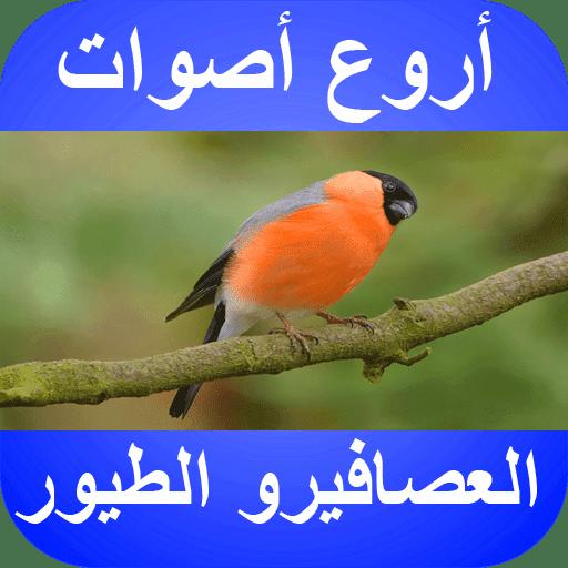 نغمات عصافير للتحميل