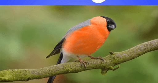 تحميل صوت عصافير وشلالات mp3