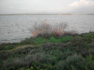 Larnaka Salt Lake in February, with flamingoes in the distance.