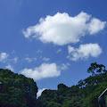 森林,明治神宮,原宿,空,雲〈著作権フリー無料画像〉Free Stock Photos
