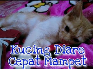Cara tangani kucing Diare