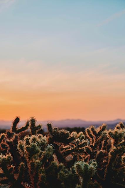 Desert Cactus Sunset Make a Wish