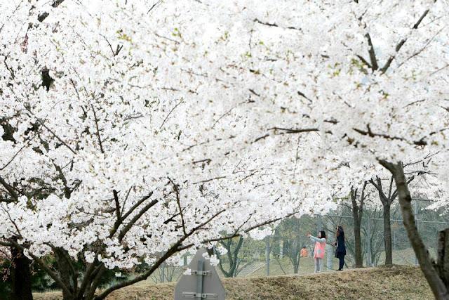 Tổng hợp bộ đề thi topik Tiếng Hàn 2017