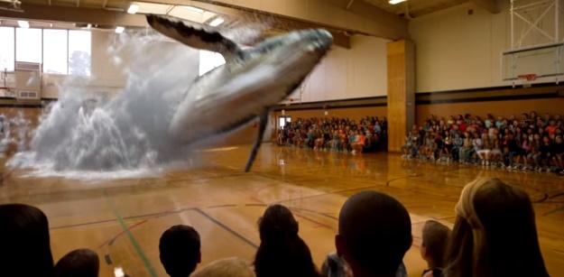Video Ikan Paus yang tiba-tiba muncul di lantai