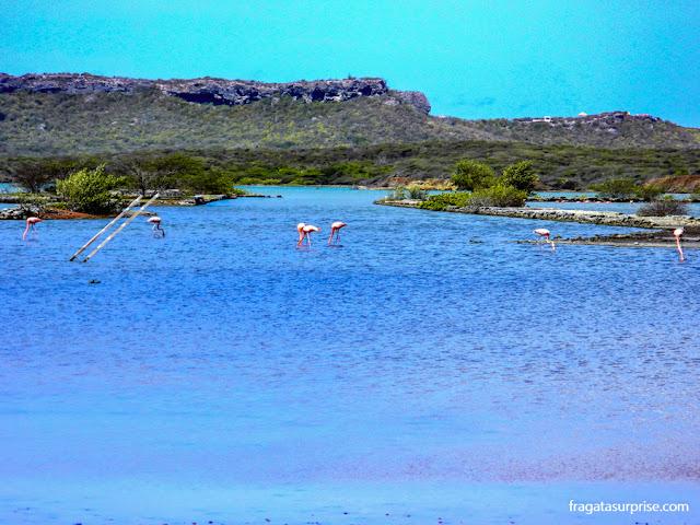 Flamingos em Curaçao
