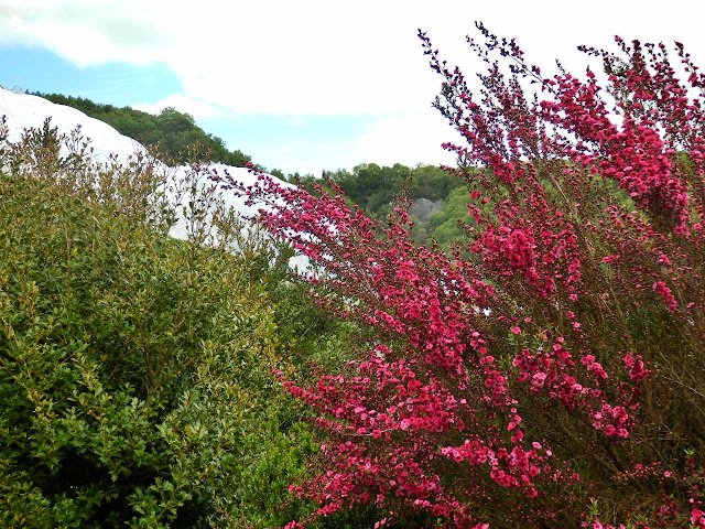 Colourful shrubs at the Eden Project