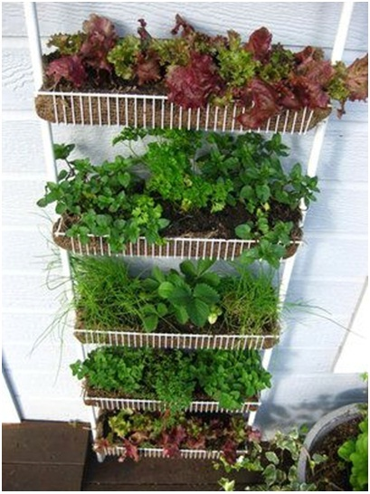 Manfaatkan rak perabot dapur jadi pot tanaman