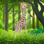 G4K Happy Giraffe Escape