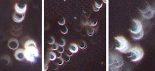 orb crescents