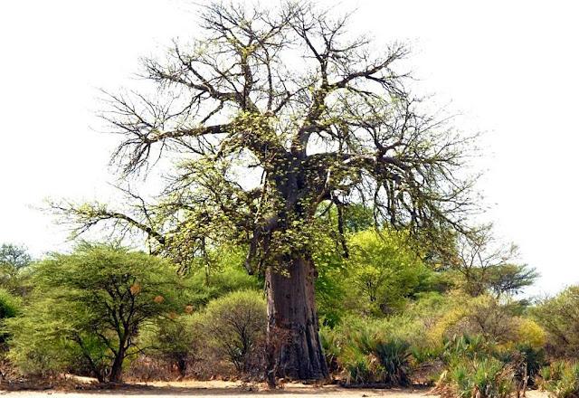road trip namibië, divundu, okavango rivier, shamatapa village, mahango core area, Animal Disease Control Checkpoint Mururani, rundu, caprivistrook, etosha, divava kavango lodge, Hambukushu, grootfontein,