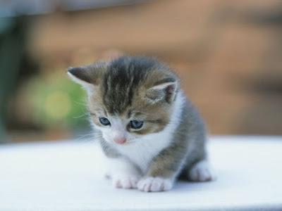صور صور قطط كيوت 2020 خلفيات قطط جميلة جدا 611.jpg