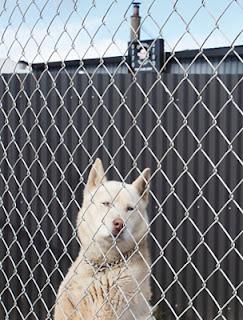 Bandido's Guard-Dog.
