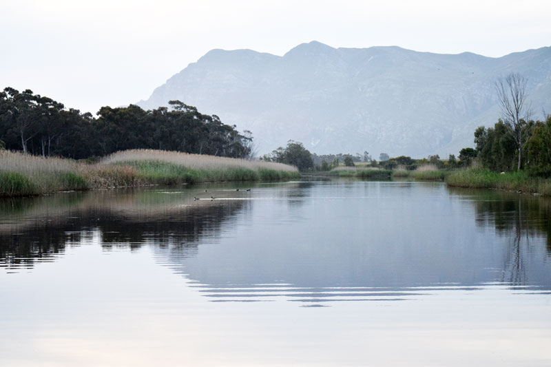 DSC 5313835 Stanford Wine Route Launch: Don Gelato, African Queen
