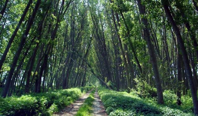 Απειλείται με εξαφάνιση το 40% των ειδών δένδρων στην Ευρώπη