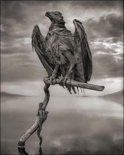 Natron lake calcified eagle