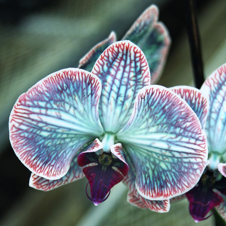 15 Most Beautiful Black Flowers: صور أجمل 10 أزهار فى العالم
