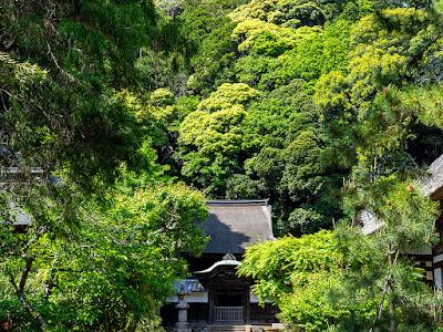 Fresh green leaves: Shari-den, Engaku-ji